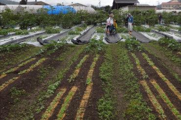 体験農園第10回開催