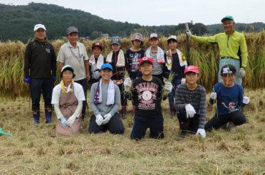 稲刈体験。