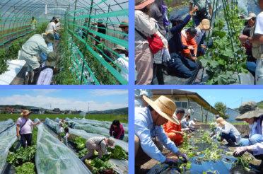 体験農園第3回開催