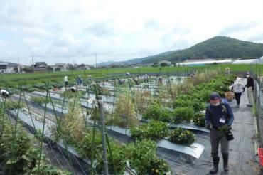 体験農園第24回開催