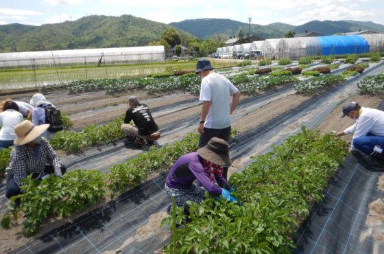 体験農園第22回開催