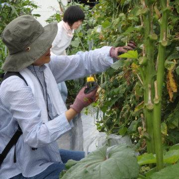 体験農園第8回 & 夏の収穫祭