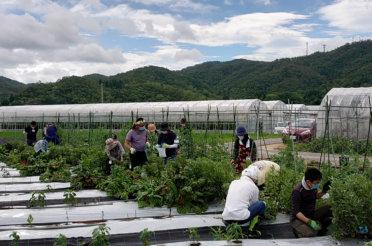 体験農園第23回開催