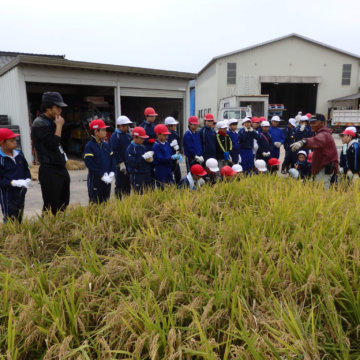 稲刈り体験