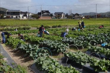 体験農園第11回開催